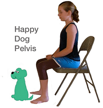 happy-dog-pelvis