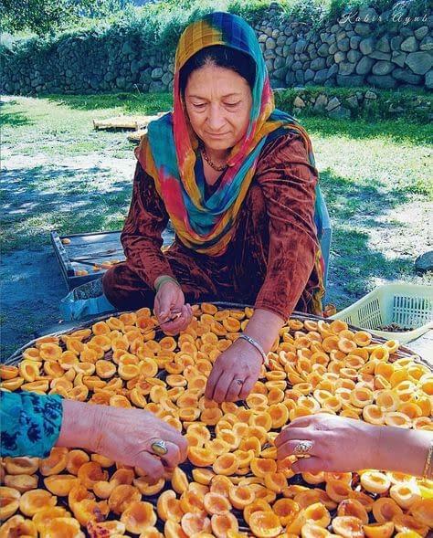 Hunza - Séchage d'abricots à Gojal, vallée de la Hunza