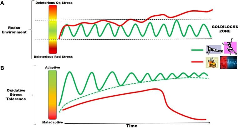 oxidative-stress-adaptation